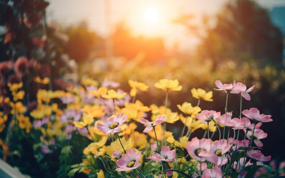 Utöka trädgården med härliga växter!