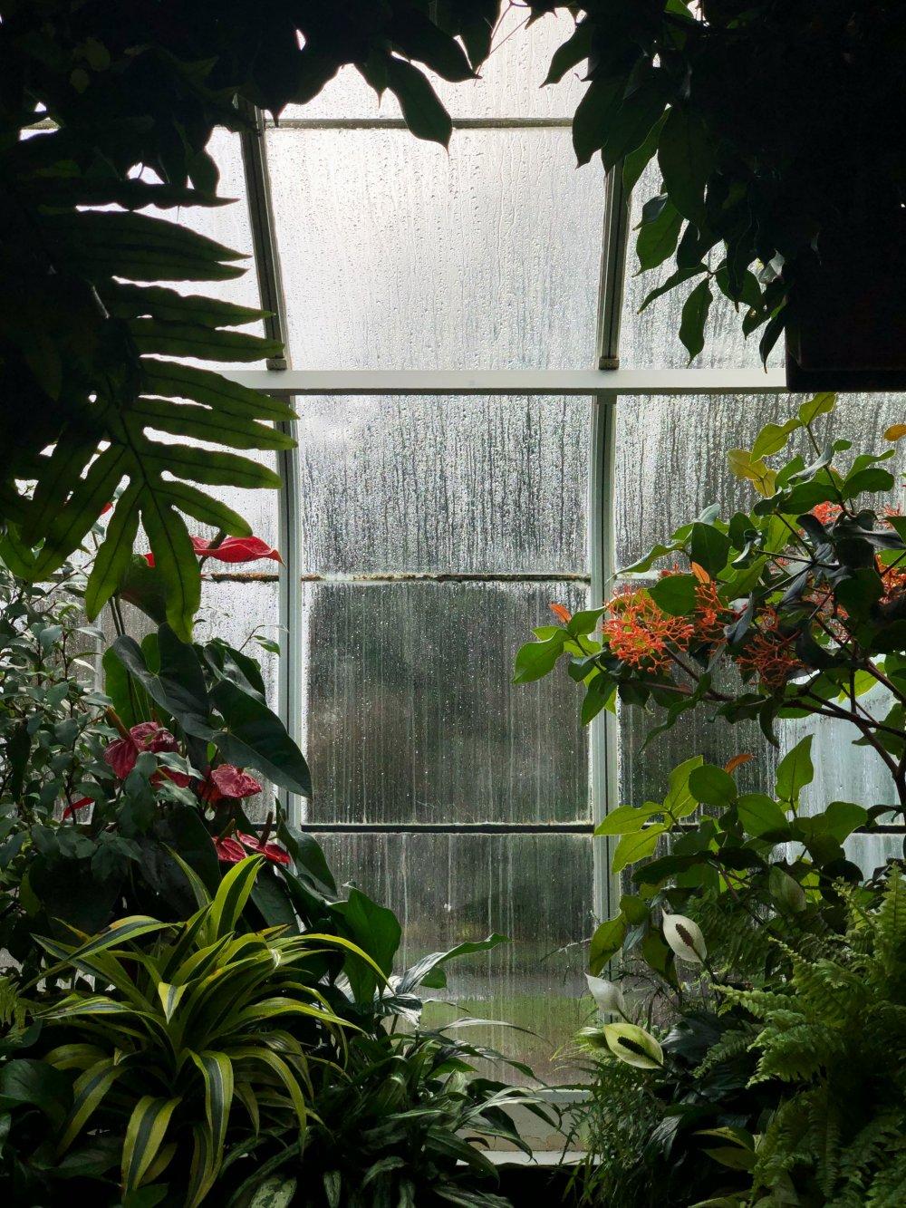 En handelsträdgård erbjuder mer än bara blommor